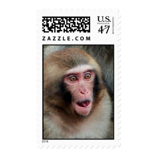 Japanese Macaque Monkey Postage Stamp