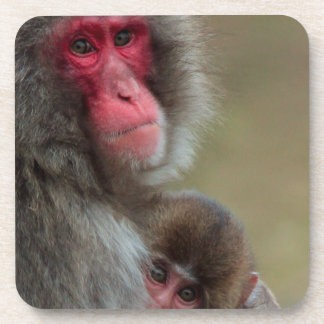 Japanese Macaque Monkeys Coasters