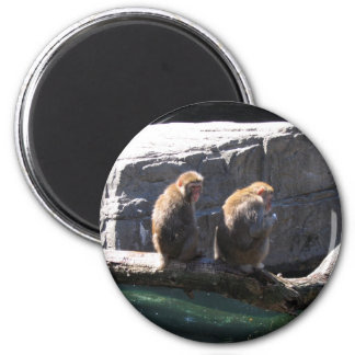 Japanese Macaque Monkeys Magnet