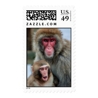 Japanese Macaque Monkeys Postage Stamp