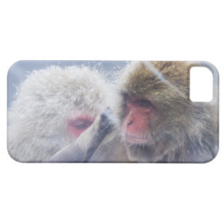 Japanese Macaques (Macaca fuscata) Grooming in iPhone SE/5/5s Case