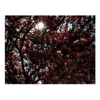 Japanese Magnolia Postcard