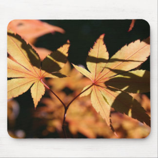 Japanese Maple (1) - Autumn Colors Mouse Pad