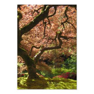 Japanese Maple Acer Palmatum Portland Garden Card