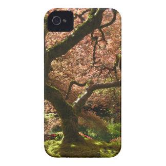 Japanese Maple Acer Palmatum Portland Garden iPhone 4 Covers