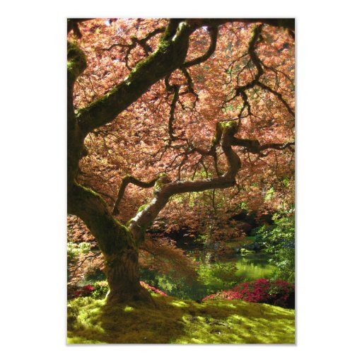 Japanese Maple Acer Palmatum Portland Garden Custom Invites