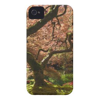 Japanese Maple Acer Palmatum Portland Garden iPhone 4 Cover
