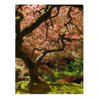 Japanese Maple Acer Palmatum Portland Garden Postcard