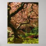 Japanese Maple Acer Palmatum Portland Garden Print