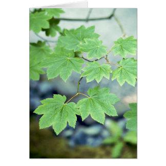 """Japanese Maple Branch"" Card"