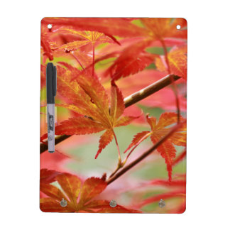 Japanese Maple Dry-Erase Board