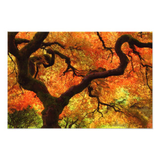 Japanese Maple in a Japanese Garden in the Autumn Photographic Print