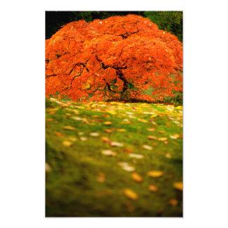 Japanese Maple in a Japanese Garden in the Autumn Art Photo