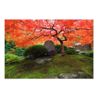 Japanese Maple in a Japanese Garden in the Autumn Photo Art