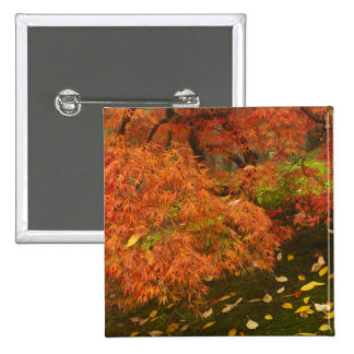 Japanese maple in fall color 2 pinback button