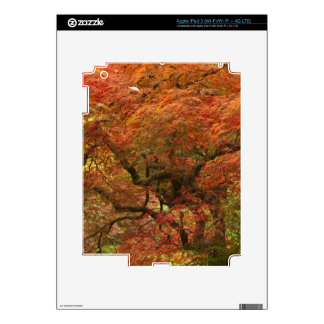 Japanese maple in fall color 4 iPad 3 decal