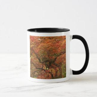 Japanese maple in fall color 4 mug