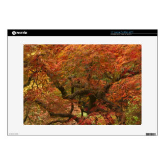 Japanese maple in fall color 4 skin for laptop