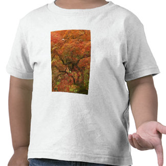 Japanese maple in fall color 4 t shirt