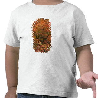 Japanese maple in fall color 4 tshirts