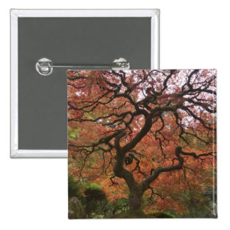 Japanese maple in fall color 5 button
