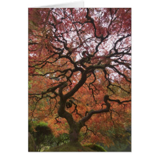 Japanese maple in fall color 5 card