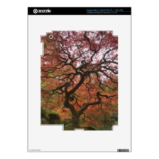 Japanese maple in fall color 5 iPad 3 skin