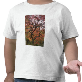 Japanese maple in fall color 5 shirts
