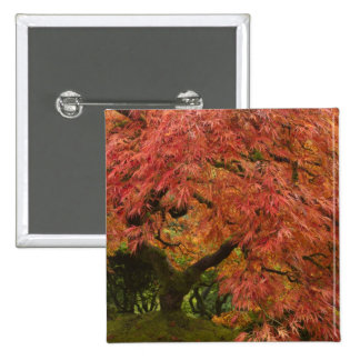 Japanese maple in fall color pinback button