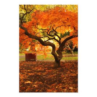 Japanese Maple in the Autumn Art Photo