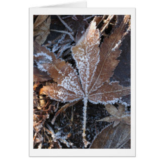 Japanese Maple Leaf Frosted by Winter Chill Card