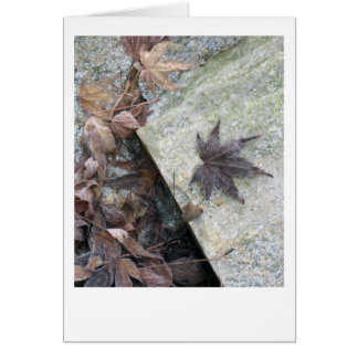Japanese Maple Leaf Frosted by Winter Chill Cards