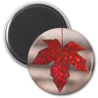Japanese Maple Leaf Magnet