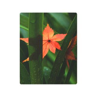 Japanese Maple Leaf Metal Photo Print