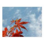 Japanese Maple Leaf Postcard