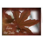 Japanese Maple Leaf Save the Date Announcement Cards