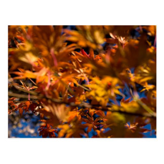 Japanese Maple Leaves Postcards