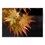 Japanese Maple Note Cards Spring Foliage