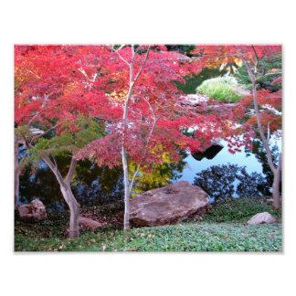 Japanese maple photo art