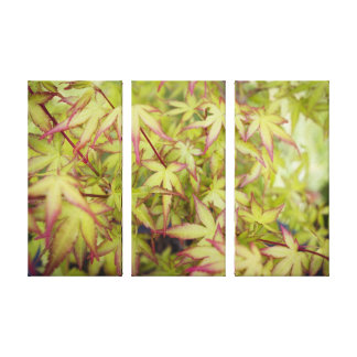 Japanese Maple Red Fringe Canvas Triptych Wall Art Gallery Wrap Canvas