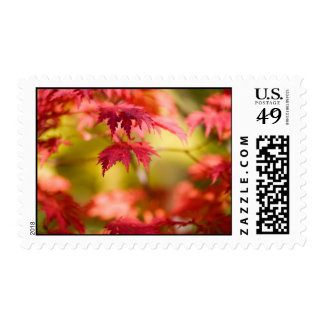 Japanese maple stamp