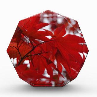 Japanese Maple Tree Acrylic Award
