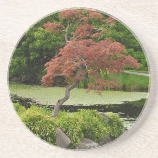 Japanese maple tree and garden pond drink coaster