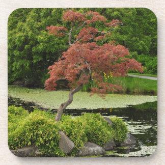 Japanese maple tree and garden pond beverage coaster