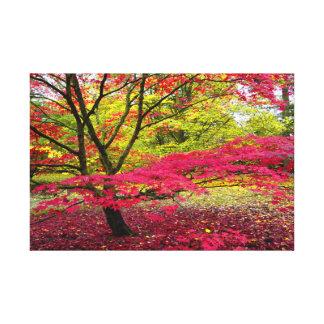 Japanese Maple tree at Westonbirt Arboretum Canvas Print