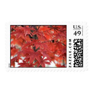Japanese Maple Tree Fall Foliage Postage Stamp