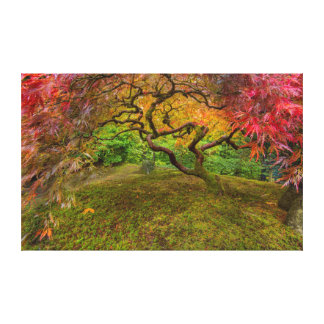 Japanese maple tree in autumn color canvas print