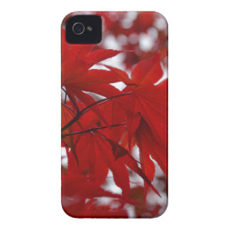 Japanese Maple Tree iPhone 4 Cover