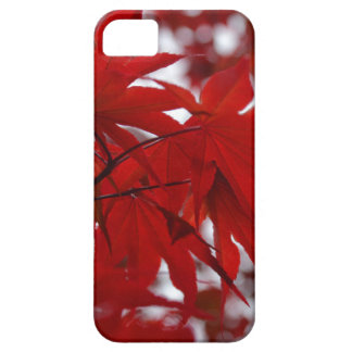 Japanese Maple Tree iPhone SE/5/5s Case