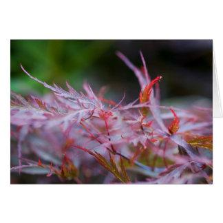 """""""Japanese Maple Tree Leaves"""" Card"""